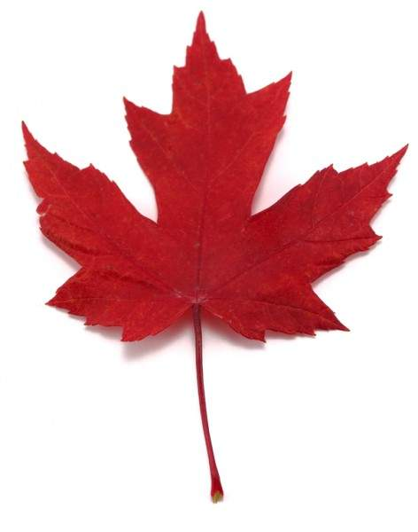 red-maple-leaf-small